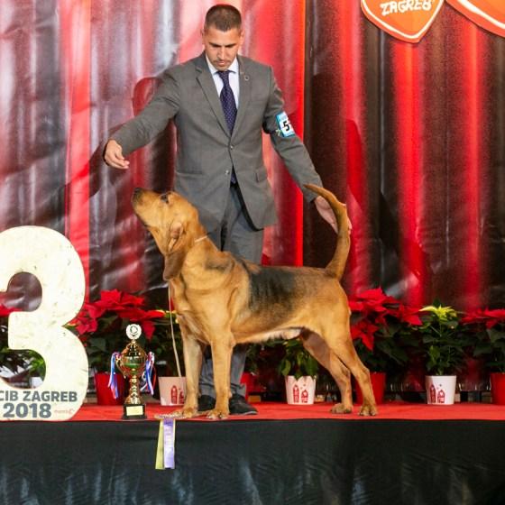 Kmetty-házi angol véreb kennel, tenyészet, bloodhound kennel, puppy, kölyök angolvéreb, blood hound