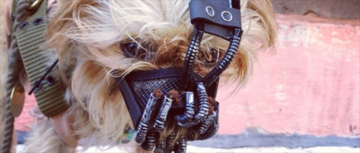 6 Bizarre Halloween Costumes For Dogs Bloody Disgusting