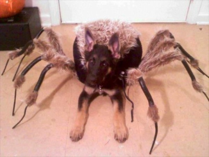 6 Bizarre Halloween Costumes For Dogs!!
