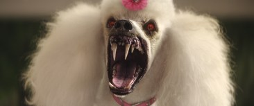 When the creatures from R.L. Stine's (Jack Black) Goosebumps series come to life – including the Vampire Poodle (pictured) – it's up to Stine to team up with three teenagers to get these figments of Black's imagination back in the books where they belong and save the town.
