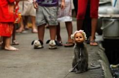 This Monkey Speaks Evil