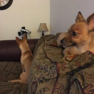 Dogs Watching Halloween: Resurrection