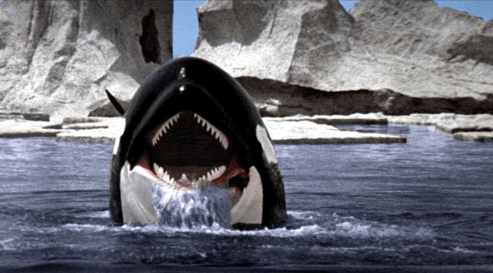 Orca Swimming To Blu Ray Bloody Disgusting
