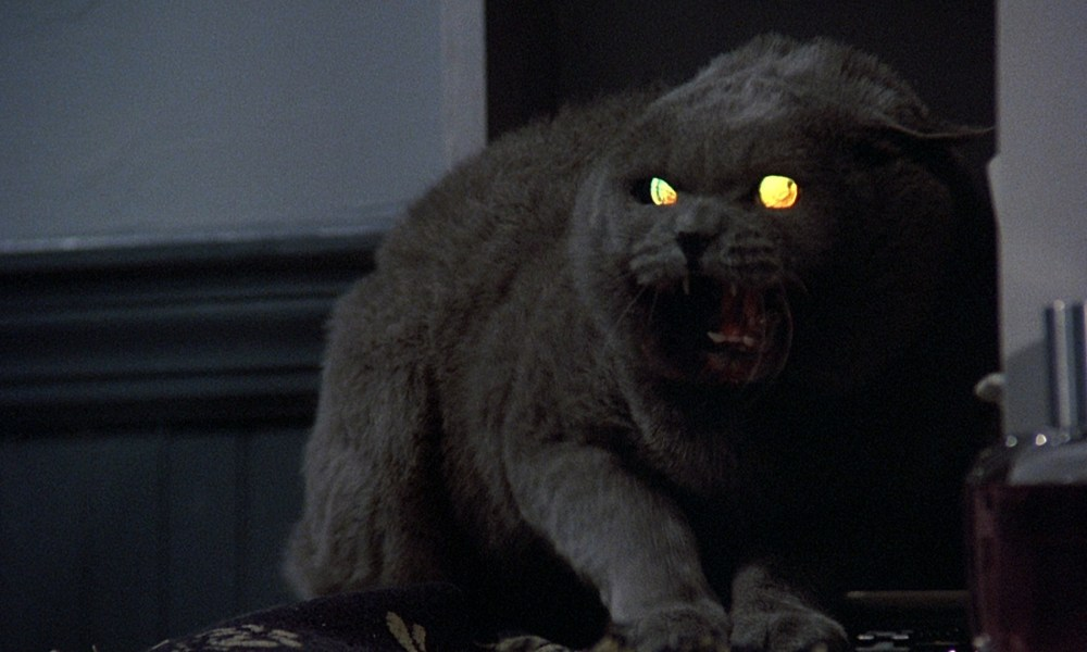 """""""Texas ChainPaw Massacre"""" Helps You Adopt Pets That Look Like Animals from Horror Movies!"""