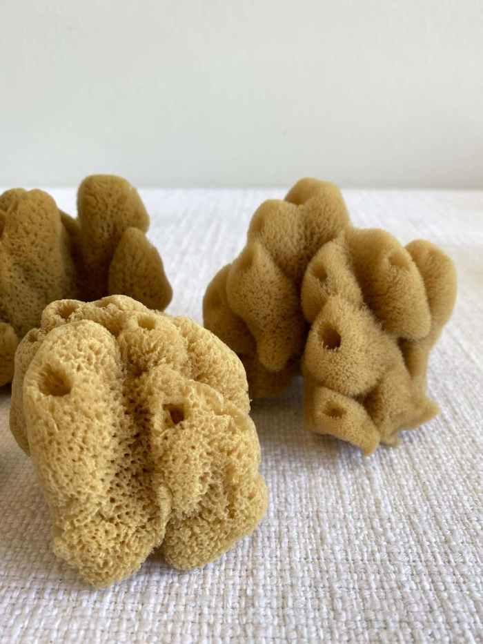 Set of 4 Assorted Natural Sea Sponges