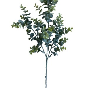 Eucalyptus Stem