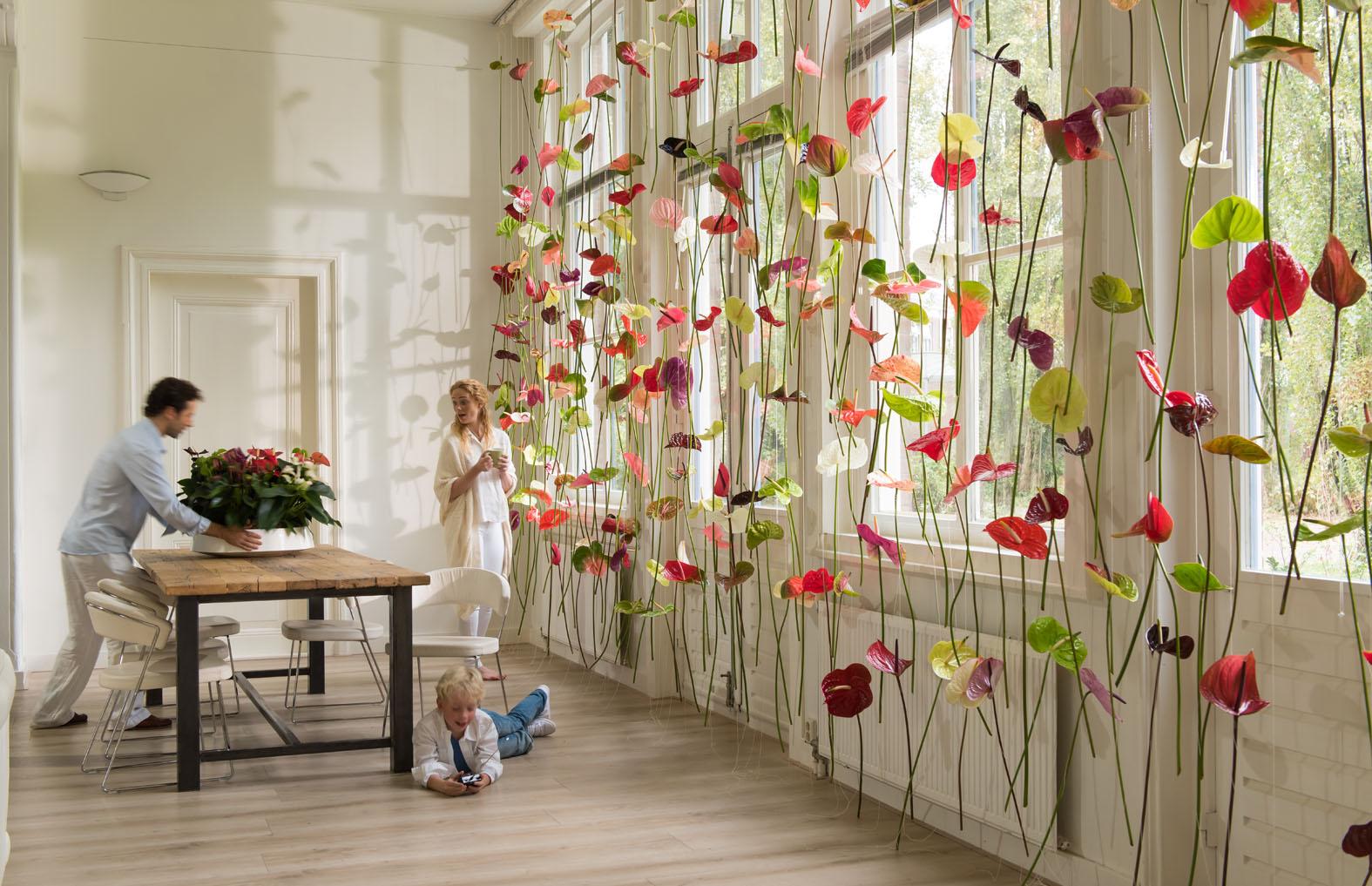 Original window decoration: Anthurium flower curtains