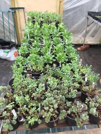 ebay plants 220316