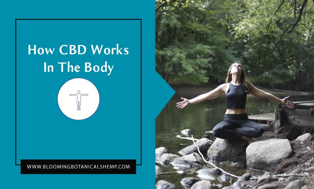 How CBD Works in the Body + Achieving a balanced Life