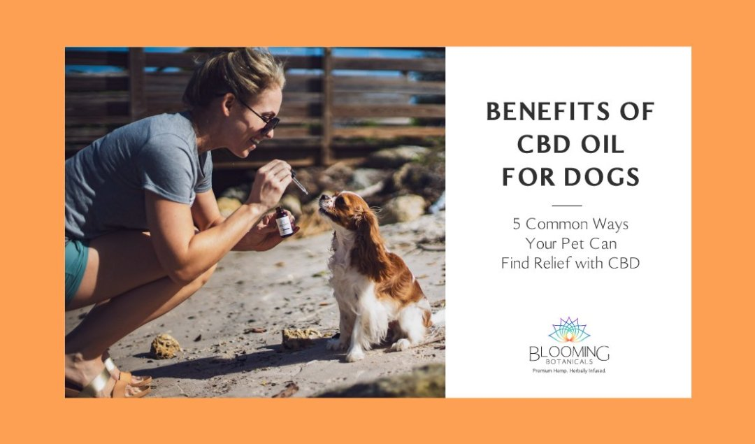 Woman giving Blooming Botanicals Pet CBD oil to a small brown and white dog at the beach