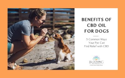 5 Benefits of CBD Oil for Dogs You Need to Know
