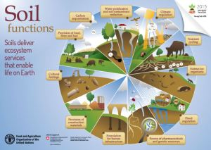 Soil Functions infographic