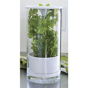 glass-herb-keeper