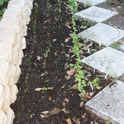 Options for Edible Borders