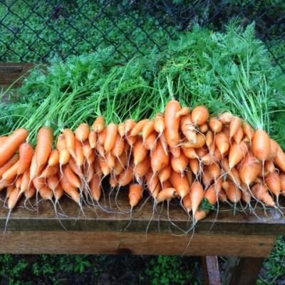 Justin Has Carrots!