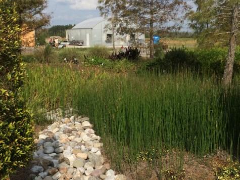 exploration gardens wetlands