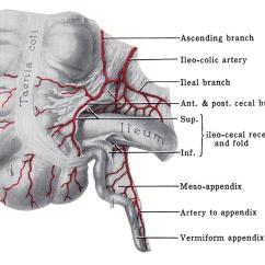 Where S My Appendix Diagram Kenwood Kdc 255u Wiring Vermiform Imagenesmy
