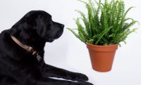 Safe indoor plants for cats and dogs | Bloomscape