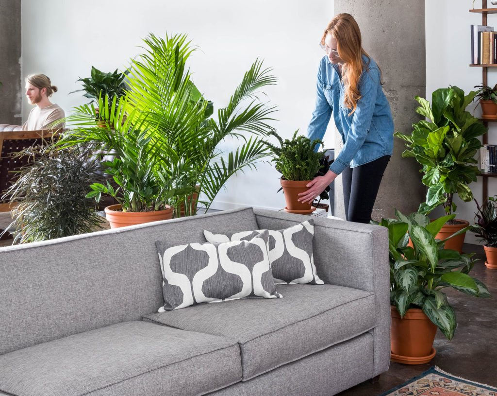 Create An Indoor Jungle: Our Favorite Plants For