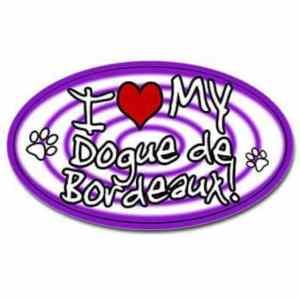 Blooms-County-Dogue-de-Bordeaux- Mastiff Breeder