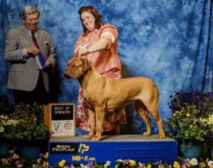 Gemma Bitch Dogue De Bordeaux Awards 2