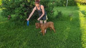 Toni Training dog