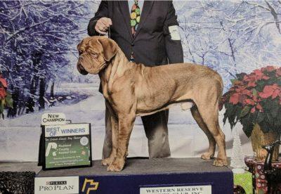 Blooms County Dogue de Bordeaux Awards 4
