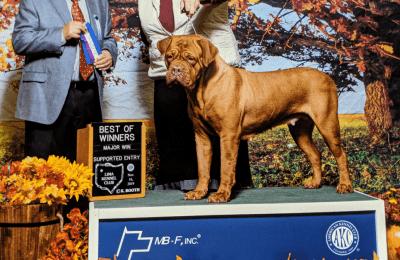 Gemma Bitch Bloom's County Dog De Bourdeux