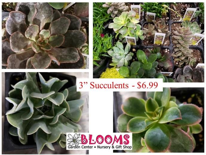 """3"""" Succulent Plants"""