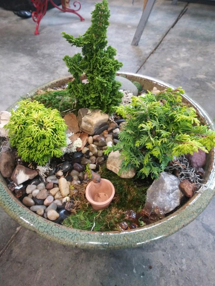 Miniature Evergreens