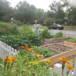 Front yard garden as the year came to a close. Eight raised beds and fenced all the way around!