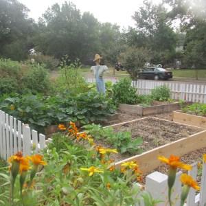 Front yard garden!