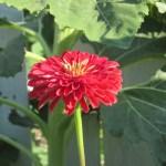 front yard garden flower border 001