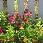 front yard garden flower border 006