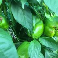 My Trick to a Successful Summer Garden