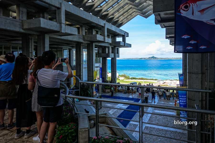 Okinawa Tourist Guide: Okinawa Churaumi Aquarium