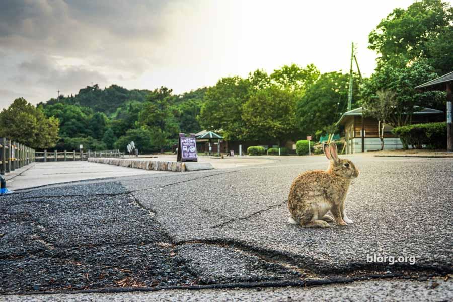 Bunny Bunny Island: An Island In Japan Full Of Bunnies! (Part 2)