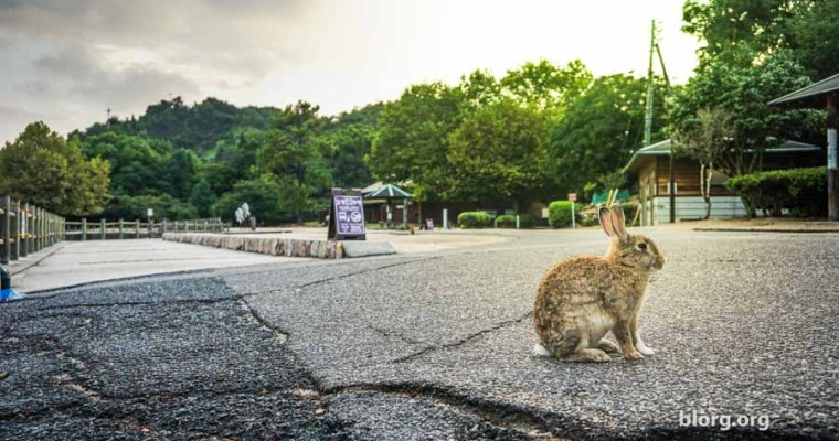 Bunny Bunny Island: An Island In Japan Full Of Bunnies! (Part 2)