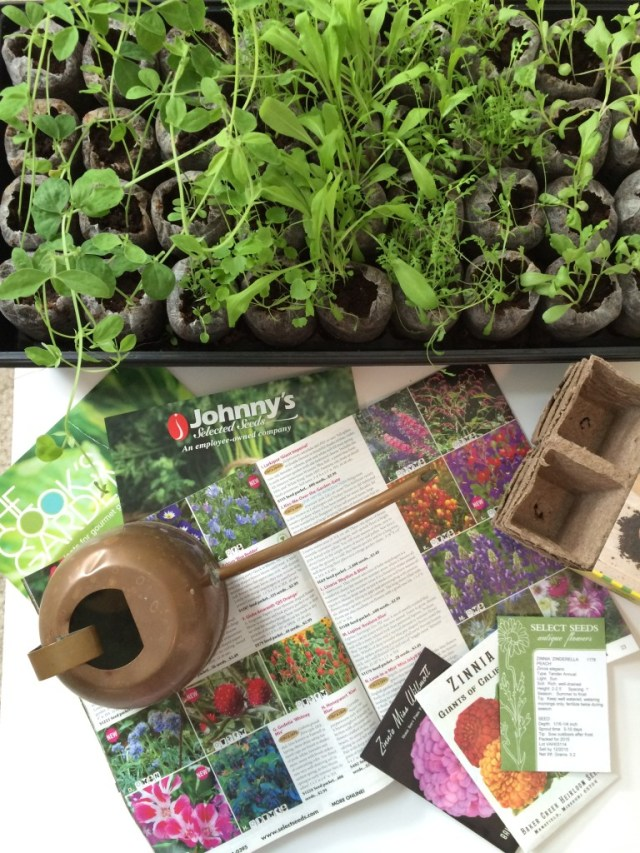 Tips to Grow Your Seed Collection