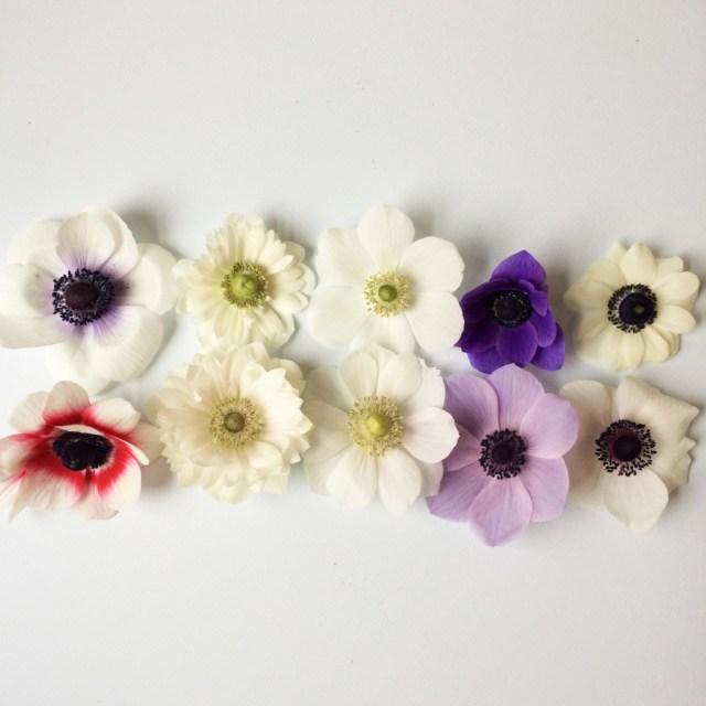 Beautiful Anemones at BlossomandBranchNC.com