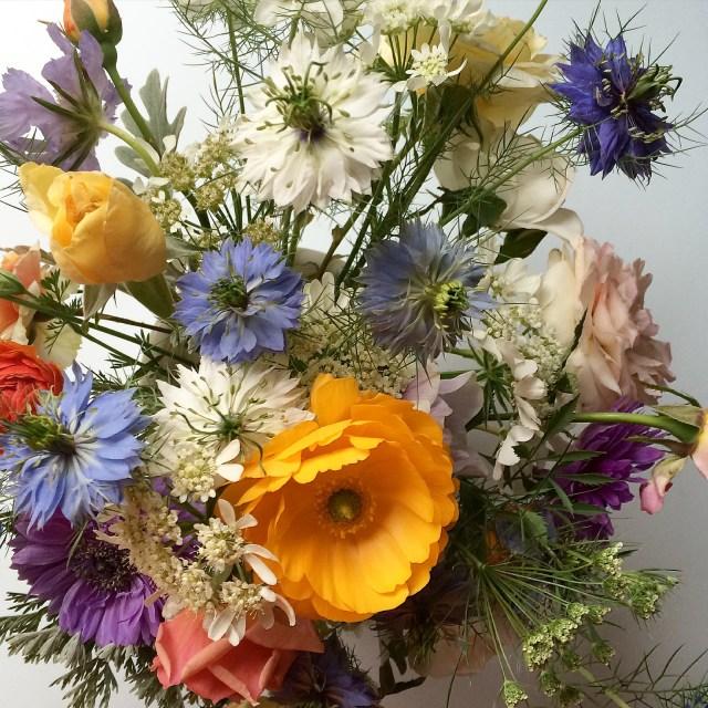 BlossomandBranchNC-nigella