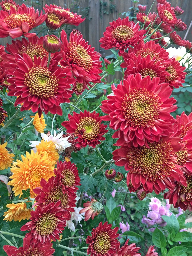 Blossom and Branch NC | Mums