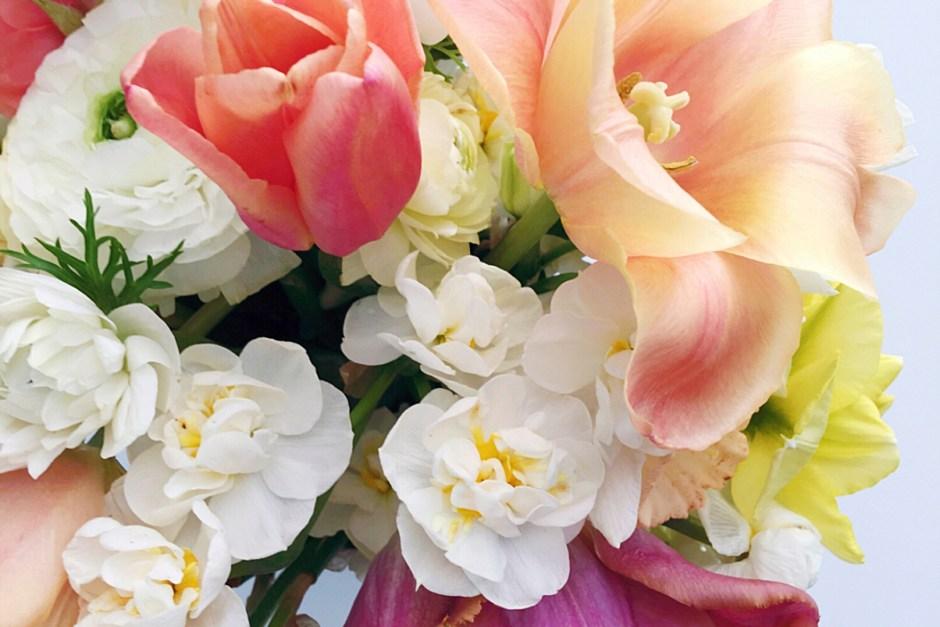 Florist's Garden Series: March 2017 in the Garden