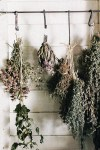 How to Dry and Preserve Herbs