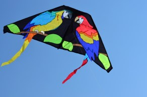 Parrots of paradise kite