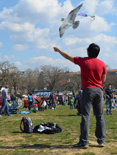 It's a bird! Or just another kite