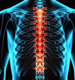 3d illustration human body spine card of a skeleton body parts [ 2800 x 1575 Pixel ]