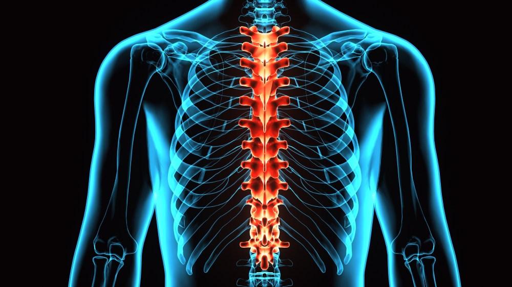 medium resolution of 3d illustration human body spine card of a skeleton body parts