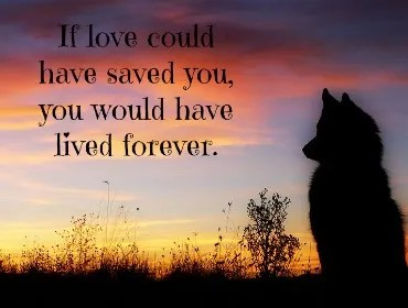 Pet Memorial Gifts Ideas to Help You Say Goodbye to a Dog or Cat