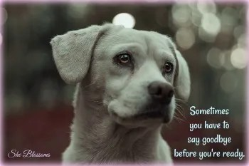 5 Ways to Deal With Guilt and Grief After Rehoming Your Dog ⋆ She